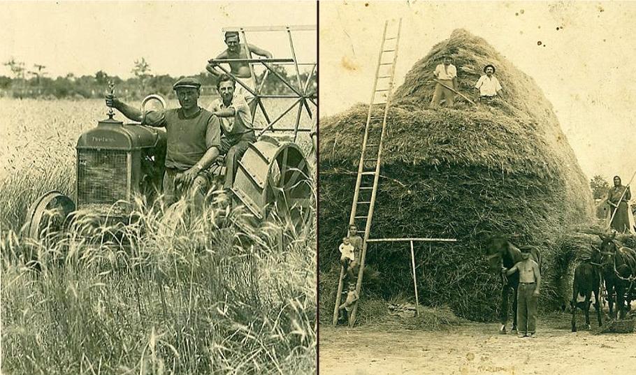 Kosidba žita nekada u Žitištu (tada Begej Sveti Đurađ) FOTO