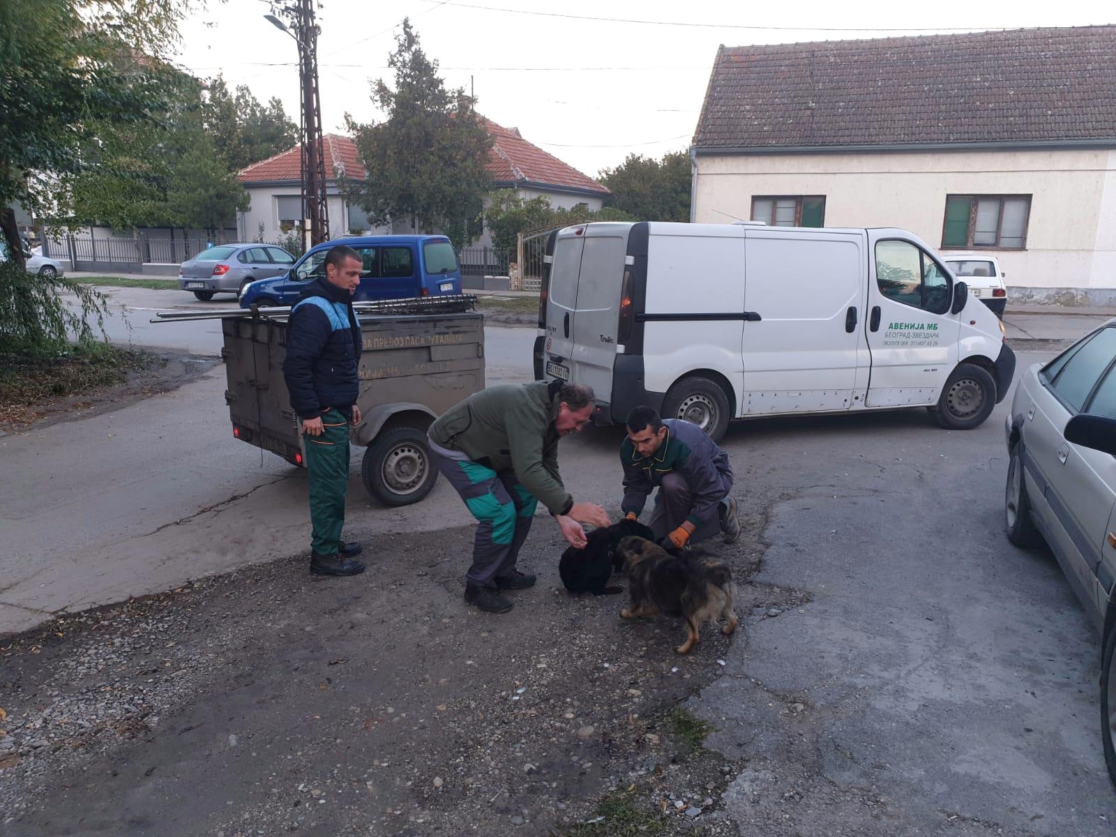 Opština Žitište - Akcija hvatanja pasa lutalica