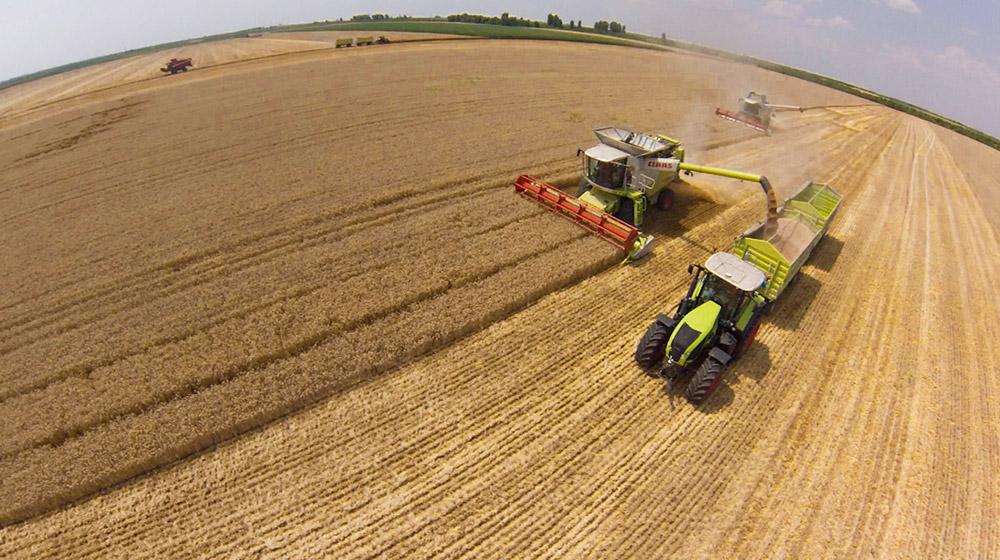 Žitište: Subvencije za osiguranje useva pšenice