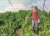 Žitište: Uspešna proizvodnja povrća u plastenicima