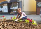 Uređenje parkova i zelenih površina u naseljenim mestima opštine Žitište