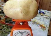 Krompir za Ginisa u Međi